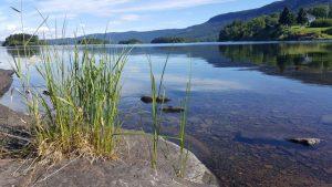 Lac représentant la sérénité d'un choix libre